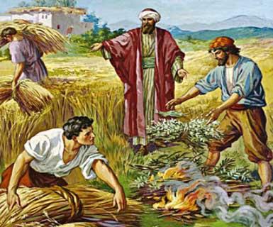 CHÚA NHẬT XVI THƯỜNG NIÊN A (Mt 13,24 -43)
